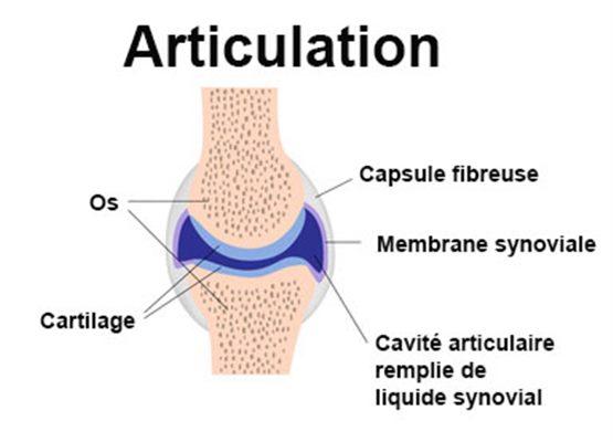 articulation_article